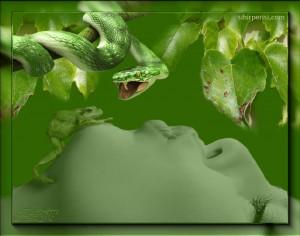 serp.frog_.girl_-300×236
